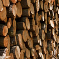 How are timber proceeds taxed
