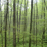 ForestManagement