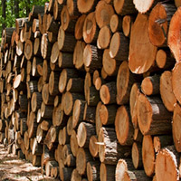 Selling Your Timber