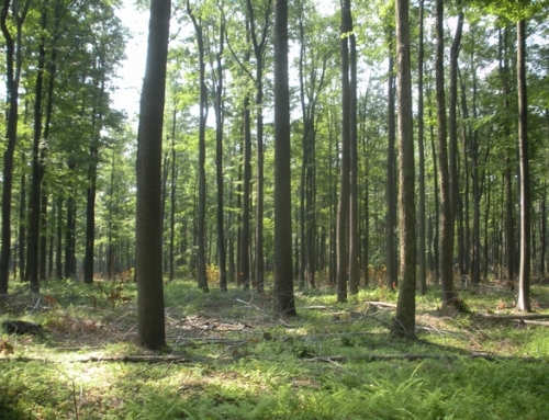 Forest Management; NYS 480A Enrollees Reduce Taxes