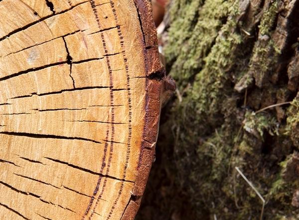 TimberTheftblog