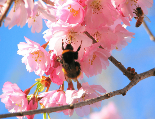 The Magic of Honeybees in Your Forest