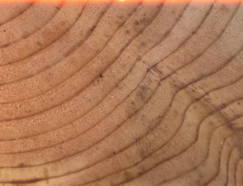 Is A New Market for Hardwoods Coming Our Way?
