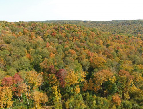 A Bird's Eye View of Fall Foliage and A Winter Forecast