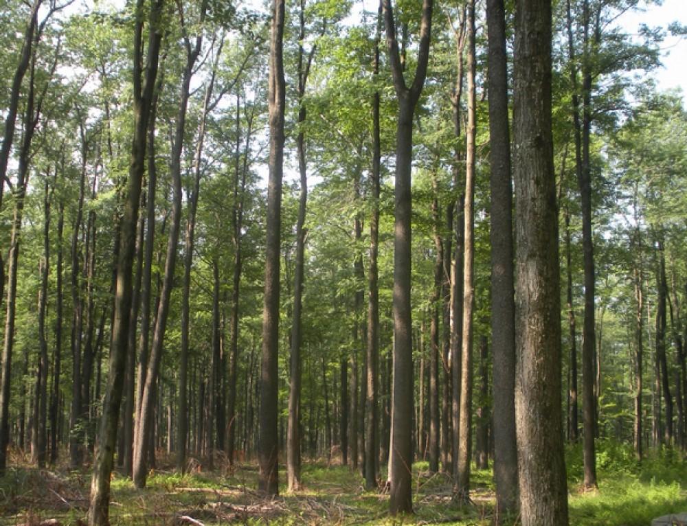 20 acres in Morgan County, West Virginia